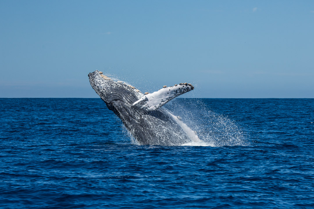 5 fotos que nos recuerdan porque las Ballenas son lo máximo